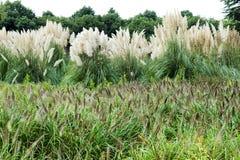 Het gras van de herfst Royalty-vrije Stock Afbeeldingen