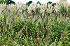 Het gras van de herfst Stock Afbeelding
