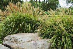 Het gras van de herfst Stock Foto