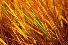 Het gras van de herfst stock afbeeldingen