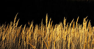 Het gras van de herfst. Royalty-vrije Stock Foto