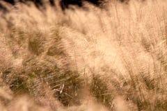 Het gras van de herfst Royalty-vrije Stock Fotografie