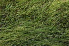 Het gras van de herfst De achtergrond van de aard, close-up Royalty-vrije Stock Foto