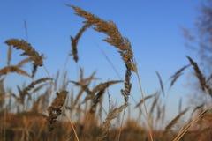 Het gras van de herfst De achtergrond van de aard, close-up Royalty-vrije Stock Afbeeldingen