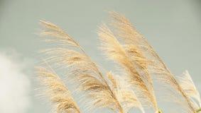 Het gras van de herfst De achtergrond van de aard, close-up Royalty-vrije Stock Fotografie