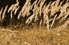 Het gras van de herfst De achtergrond van de aard, close-up Royalty-vrije Stock Foto's