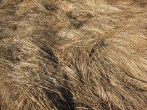 Het gras van de herfst De achtergrond van de aard, close-up Royalty-vrije Stock Afbeelding