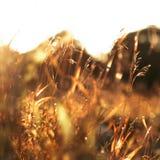 Het gras van de herfst De achtergrond van de aard, close-up Stock Fotografie