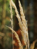 Het gras van de herfst De achtergrond van de aard, close-up Stock Afbeelding