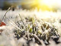 het gras van de herfstgelo Natuurlijke achtergrond Stock Foto