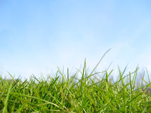 Het gras van de lente Royalty-vrije Stock Afbeelding