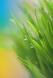 Het gras van de lente Stock Fotografie
