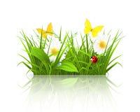 Het gras van de lente Stock Afbeeldingen