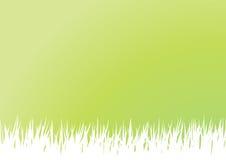 Het Gras van de lente Royalty-vrije Stock Foto