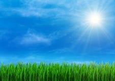 Het gras van de lente en blauwe hemel Stock Foto's