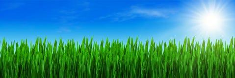 Het gras van de lente en blauwe hemel Royalty-vrije Stock Afbeelding