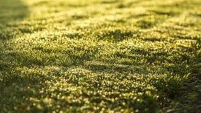 Het gras van de ochtenddauw Stock Afbeelding