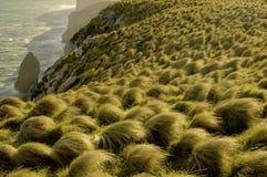 Het gras van de pol bij zonsondergang Stock Fotografie