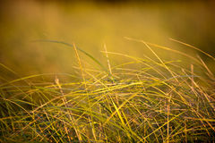 Het Gras van de prairie stock fotografie
