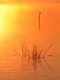 Het gras van de rivier royalty-vrije stock afbeeldingen