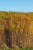 Het gras van de schakelaar stock fotografie