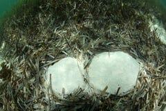 Het Gras van de schildpad Onderwater royalty-vrije stock afbeelding