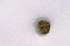 Het gras van de sneeuw Royalty-vrije Stock Fotografie