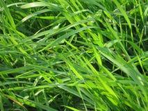Het gras van de weide stock fotografie