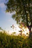 Het gras van de weide Royalty-vrije Stock Foto's