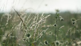 Het gras van de weide stock videobeelden