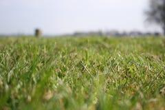 Het gras van de weide Stock Afbeelding