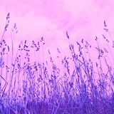 Het gras van de weide Royalty-vrije Stock Afbeeldingen