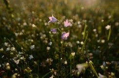 Het gras van de weide Royalty-vrije Stock Foto