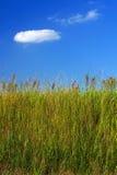 Het gras van de weide en een blauwe hemel stock fotografie