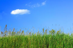 Het gras van de weide en een blauwe hemel stock afbeeldingen