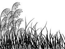 Het gras van de weide, vector Stock Foto