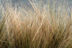 Het gras van de winter Royalty-vrije Stock Foto