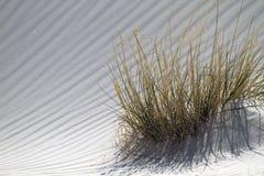 Het gras van de woestijn en gegolft wit zand royalty-vrije stock fotografie