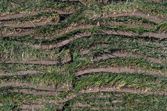 Het gras van de zode Royalty-vrije Stock Foto