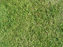 Het Gras van de zomer Stock Afbeelding