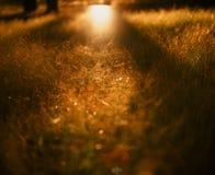 Het gras van de zomer Stock Afbeeldingen