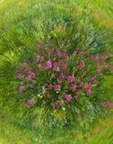 Het gras van de zomer royalty-vrije stock fotografie
