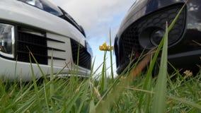 Het gras van de zonregenboog in nadrukauto's in achtergrondneus om zwart-wit te besnuffelen Royalty-vrije Stock Foto's