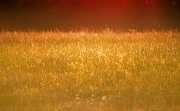 Het gras van de zonsondergangweide Royalty-vrije Stock Afbeelding