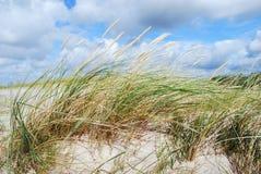 Het gras van duinen in de wind Stock Fotografie