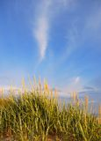 Het gras van duinen in zonlicht Stock Foto