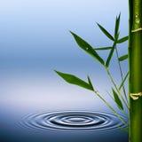 Bamboe. Royalty-vrije Stock Afbeeldingen