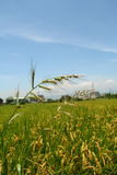Het Gras van het boerenerf Royalty-vrije Stock Fotografie