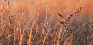 Het gras van het de winterland Royalty-vrije Stock Fotografie