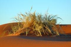 Het gras van het duin Stock Afbeelding